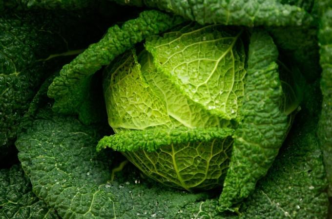 Meet the Brassicas